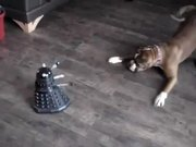 Dog Vs Robot