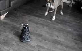 Dog Vs Robot