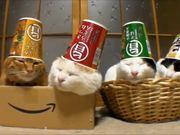 Sleeping Cats In Hats