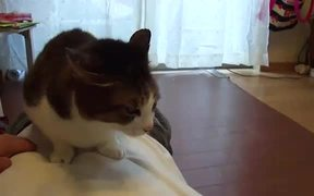 French Bulldog Cat Cleaner