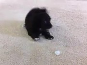Puppy Vs Ice Cube
