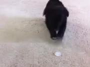 Puppy Vs Ice Cube