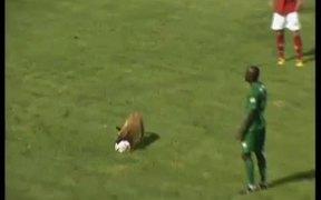 Police Dog Loves Soccer