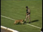Police Dog Loves Soccer