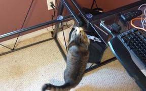 Cat Is Very Confused By Missing Glass