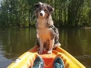 Dog Falls Asleep On A Kayak