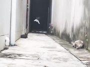 Ninja Cats Jumping