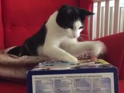 Cat Playing Whack A Finger