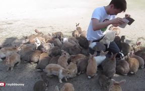 Man Is Smothered By Bunnies