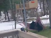 Bears Playing On The Hammoc