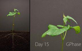 Bean Growing Timelapse