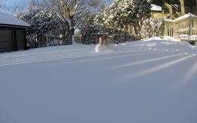 Corgi Snowplow
