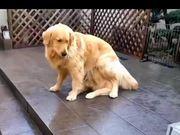 Magic Dog Hiding Under Another Dog