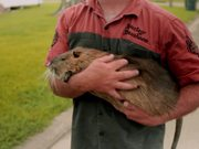 Rodents Of Unusual Size Official Trailer