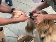 Greedy Dog