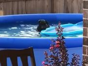 Dog Is Caught Playing In The Pool