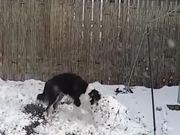 Dog & Snowman