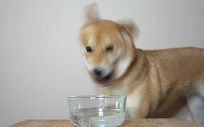 Dog & Seltzer Water.
