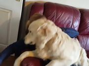 Dogs Excited To See Owner