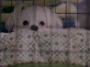 Life In The Doghouse Trailer