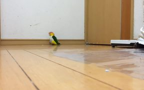 Funny Parrot