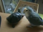 Bird Vs Turtle