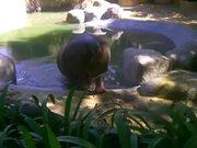 Hippo Sprinkler