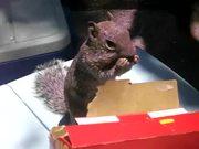 Cheez Its Squirrel