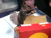 Cheez Its Squirrel