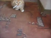 Kitten With Addiction