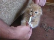 Kitten With Addiction
