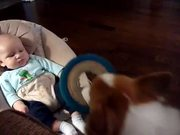Corgi And Baby Fetch