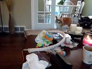 Corgi And Baby Fetch