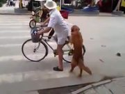 Dog Guards Owners Bike