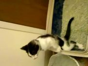 Cat Pees Standing Up