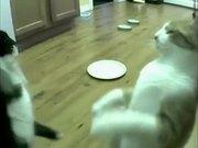 Cat Feeder Slamming