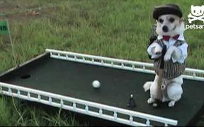 The Amazing Golfing Dog