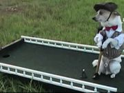 The Amazing Golfing Dog
