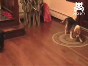 Smart Dog Gets His Toy