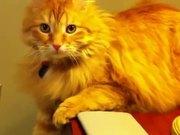 The Jerk Cat