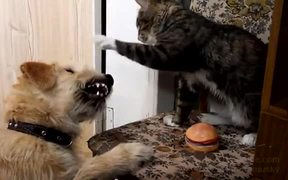 Cat Vs Dog For A Toy