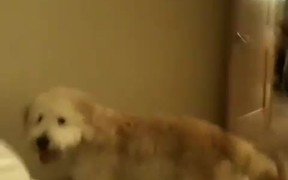 Over Excited Dog Fails