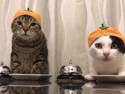 Pavlov's Cats