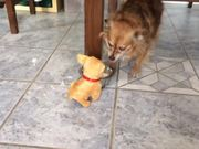 Dog & Toy Puppy