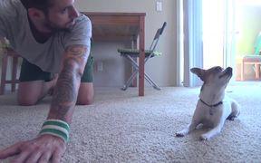 Chihuahua Yoga