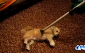 Dogs Who Love Being Vacuumed
