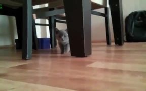Cats Sneaking Up On You