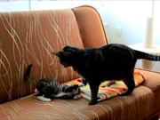 Playful Kitten Playing Games