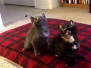 Kitten Jam