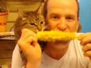 Corny Cat